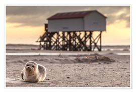 Premiumposter  Robbe in St Peter Ording - Daniel Rosch
