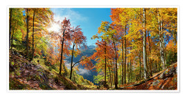 Premiumposter Mountain forest in autumn
