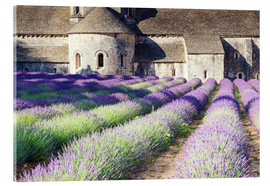 Akrylglastavla  Famous Senanque abbey with its lavender field, Provence, France - Matteo Colombo