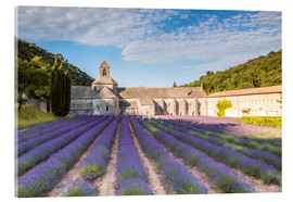 Akrylglastavla  Famous Senanque abbey with lavender field, Provence, France - Matteo Colombo