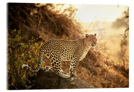 Akrylglastavla  female Leopard at sunset - Jürgen Ritterbach