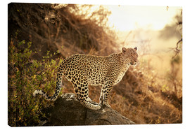 Canvastavla  female Leopard at sunset - Jürgen Ritterbach