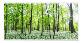 Premiumposter  A forest in springtime with wild garlic - Benjamin Butschell