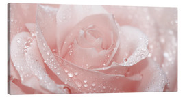 Canvastavla  Rose with drops - Atteloi