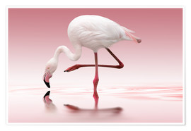 Premiumposter  Flamingo - Doris Reindl