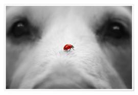 Premiumposter  Ladybug on Dog Nose - Gabi Stickler