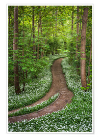 Premiumposter Path through Forest full of Wild Garlic
