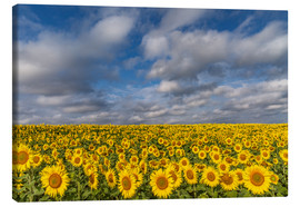 Canvastavla  Sea of Sunflowers - Achim Thomae