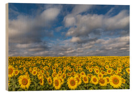Trätavla  Sea of Sunflowers - Achim Thomae