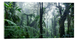 Akrylglastavla  Misty Rainforest, Costa Rica - Matteo Colombo