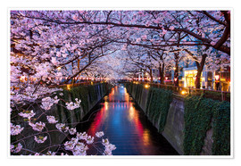 Premiumposter Pink cherry blossoms in Tokyo Japan