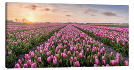 Canvastavla  tulips fields holland - Remco Gielen