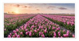 Premiumposter  tulips fields holland - Remco Gielen
