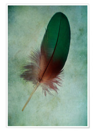 Poster Green feather