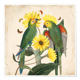 Premiumposter  Oh My Parrot II - Mandy Reinmuth