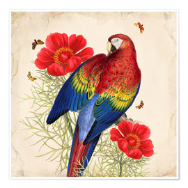 Premiumposter  Oh My Parrot III - Mandy Reinmuth