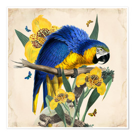Premiumposter  Oh My Parrot IX - Mandy Reinmuth