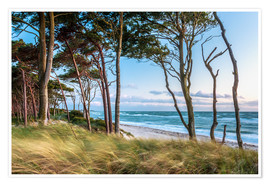 Premiumposter Coastal Forest and Beach at the Baltic Sea