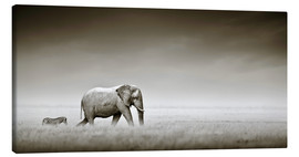 Canvastavla  Elephant and zebra - Johan Swanepoel