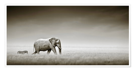 Premiumposter  Elephant and zebra - Johan Swanepoel