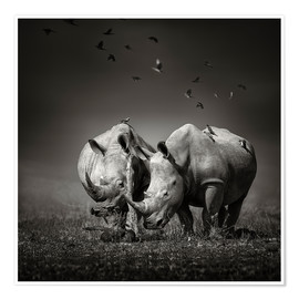 Premiumposter  Two Rhinoceros with Birds - Johan Swanepoel