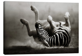 Canvastavla  Zebra rolling upside down on dusty desert sand - Johan Swanepoel