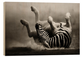 Trätavla  Zebra rolling upside down on dusty desert sand - Johan Swanepoel