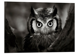 PVC-tavla  White-faced Owl perched in a tree - Johan Swanepoel