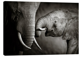 Canvastavla  Baby elephant interacting with Mother - Johan Swanepoel