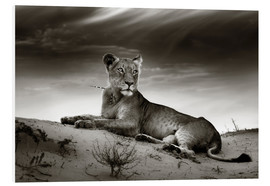 PVC-tavla  Lioness resting on top of a sand dune - Johan Swanepoel