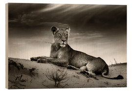 Trätavla  Lioness resting on top of a sand dune - Johan Swanepoel