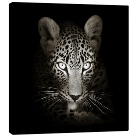 Canvastavla  Leopard portrait licking it's paw - Johan Swanepoel