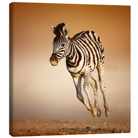 Canvastavla  Zebra calf running in dusty Etosha desert - Johan Swanepoel
