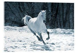 Akrylglastavla  Gray mare in snow