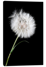 Canvastavla  the big white dandelion