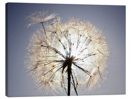 Canvastavla  Dandelion is ready to fly