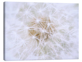 Canvastavla  Dandelion - white as snow