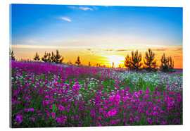 Akrylglastavla  Sunrise over a blossoming meadow