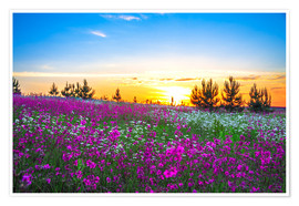 Premiumposter  Sunrise over a blossoming meadow
