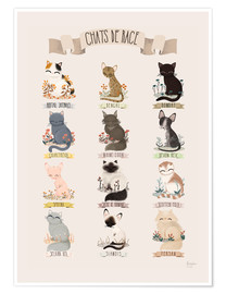 Poster  cat breeds french - Kanzi Lue