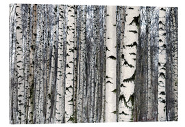 Akrylglastavla  Birch forest in winter