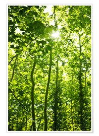 Premiumposter Green forest in sunlight