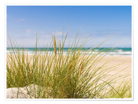 Premiumposter  Beach with dune grass in sand
