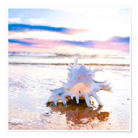 Premiumposter Shell on the beach