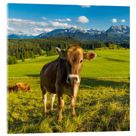 Akrylglastavla  Funny Cow in the Alps - Michael Helmer