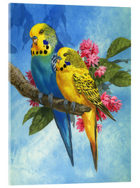 Akrylglastavla  Budgies on Blue Background - John Francis