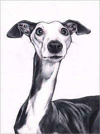 Akrylglastavla  Whippet, blue and white - Jim Griffiths
