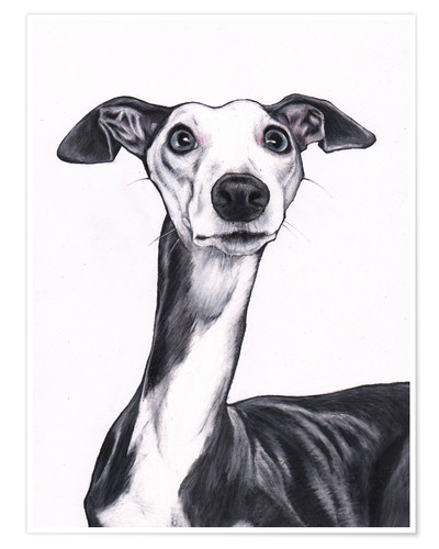 Premiumposter Whippet, blue and white