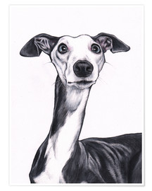 Premiumposter  Whippet, blue and white - Jim Griffiths