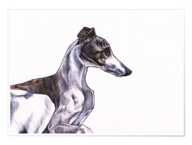 Premiumposter Whippet illustration, colour pencil drawing